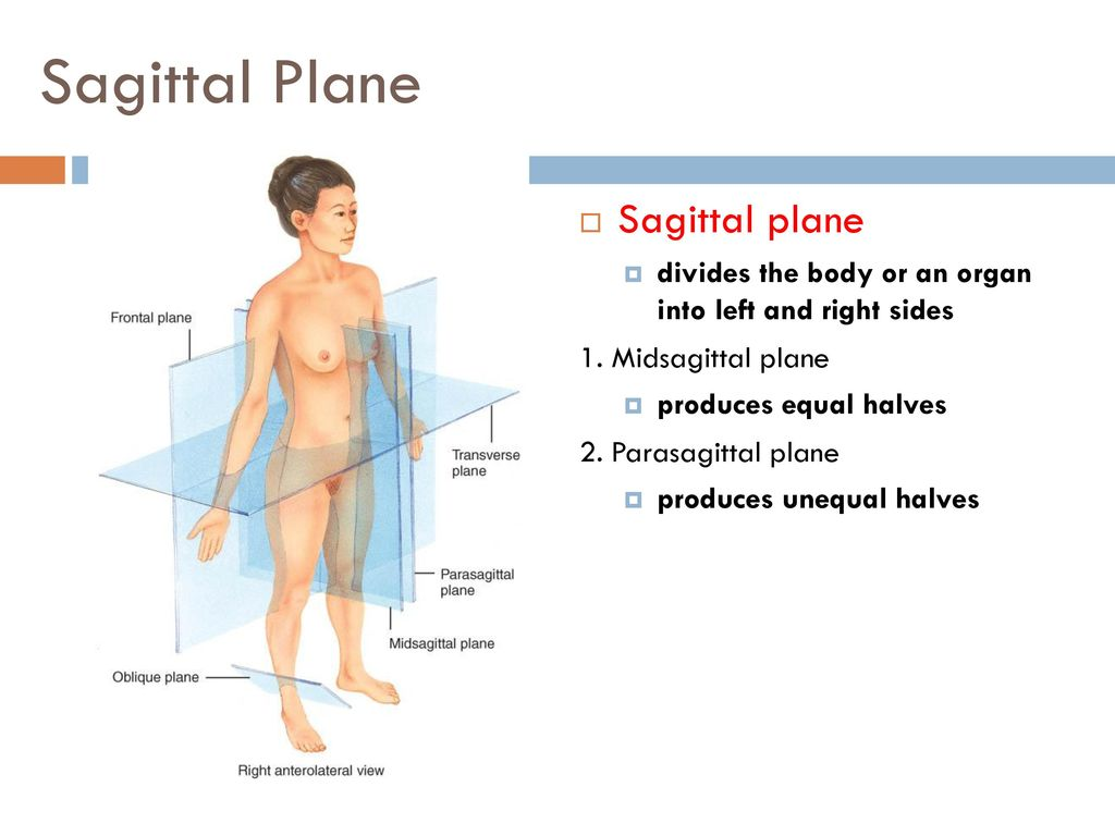 An Introduction To The Human Body Ppt Download
