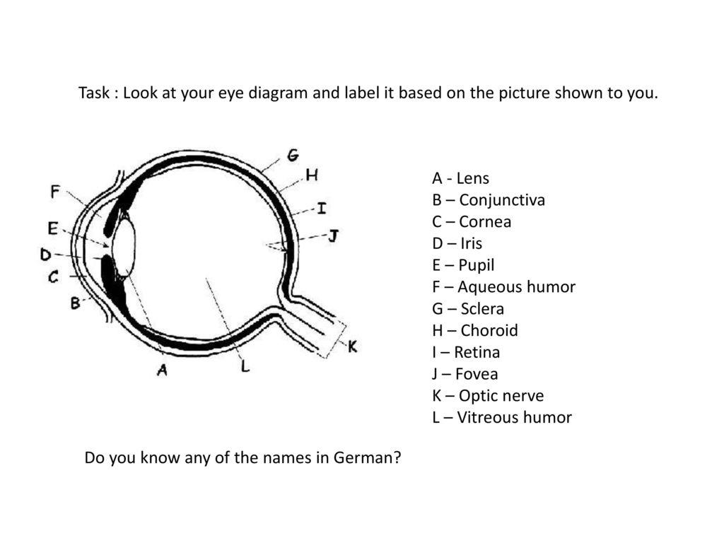 human sense organ - the eye. - ppt download