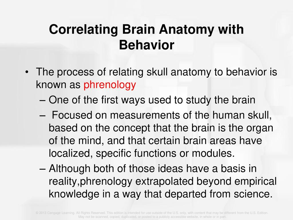 Chapter 4 Brain Anatomy. - ppt download