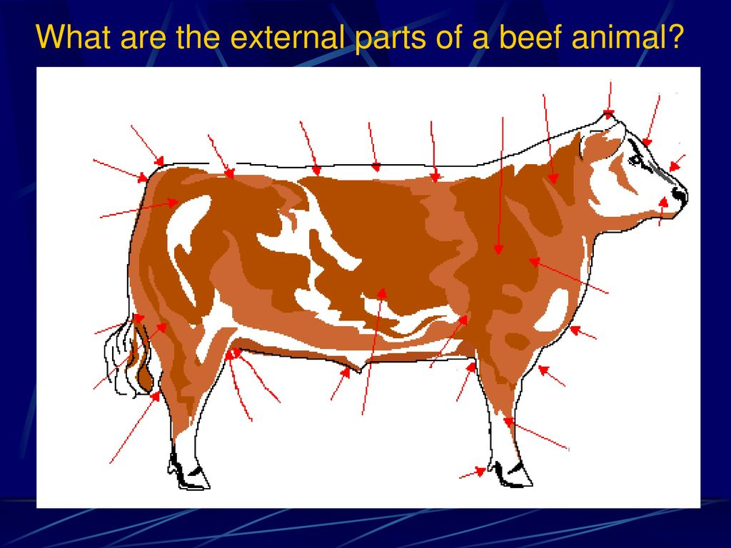 Exploring the Beef Industry - ppt download