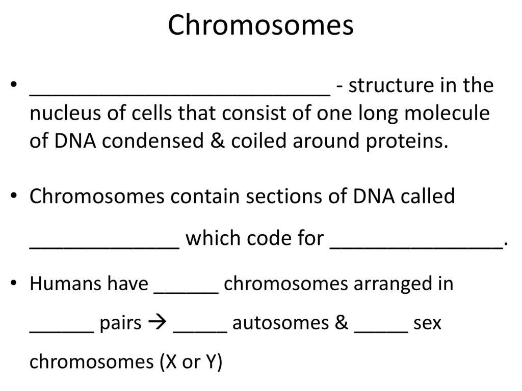 3 Chromosomes