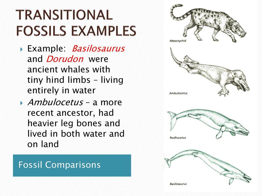 Evidence for Evolution - ppt download