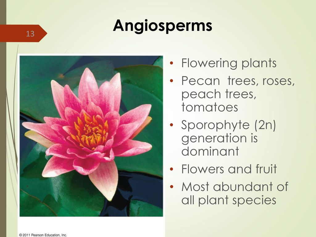 Botany Part I Overview Of Plants Plant Structure Ppt Download