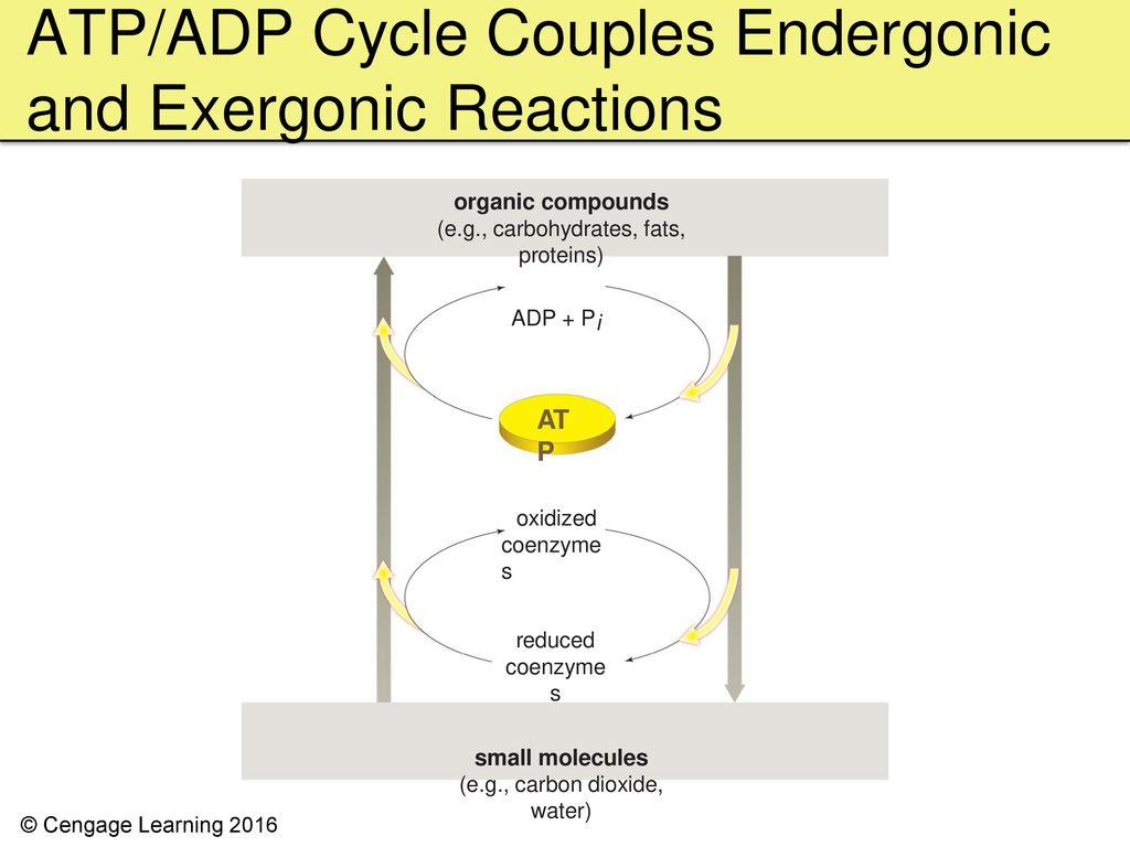 Endergonic Vs Exergonic Graph Comparison Wwwmiifotoscom