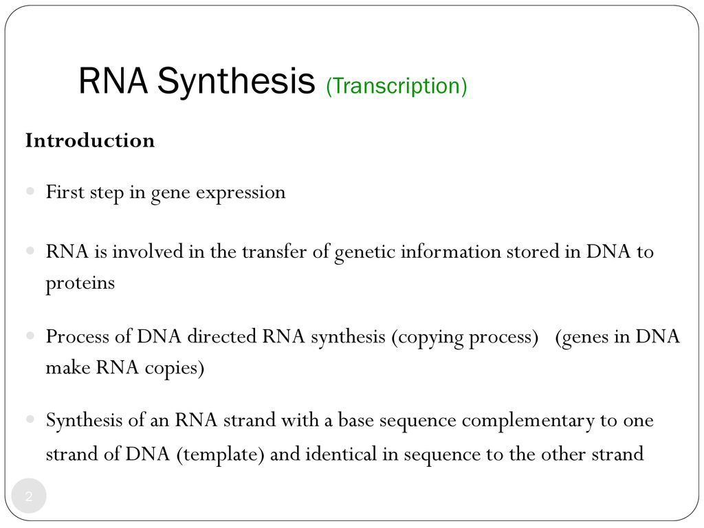 RNA Synthesis (Transcription) - ppt download