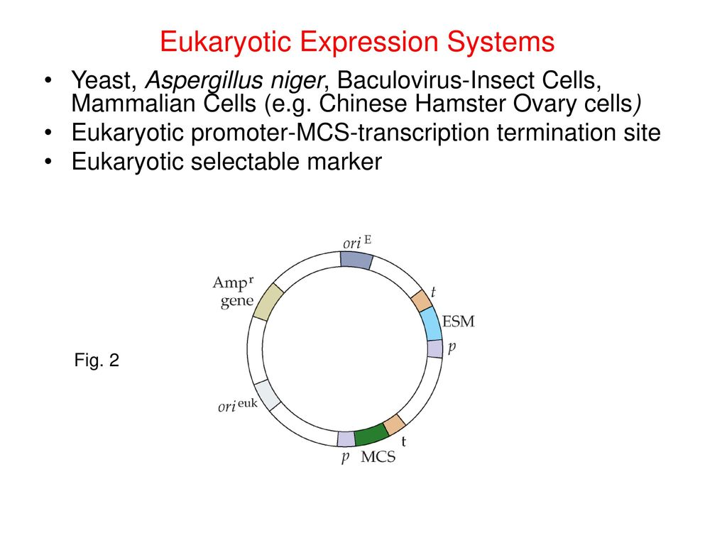 Prokaryotic Expression Systems - ppt download