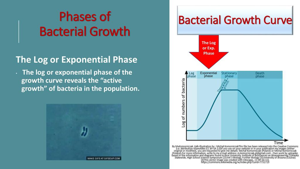 bacterial growth essay Bacteria are microscopic single-celled organisms  which causes cholera, are gram-negative bacteria there are three basic bacterial  in his essay, how we do.
