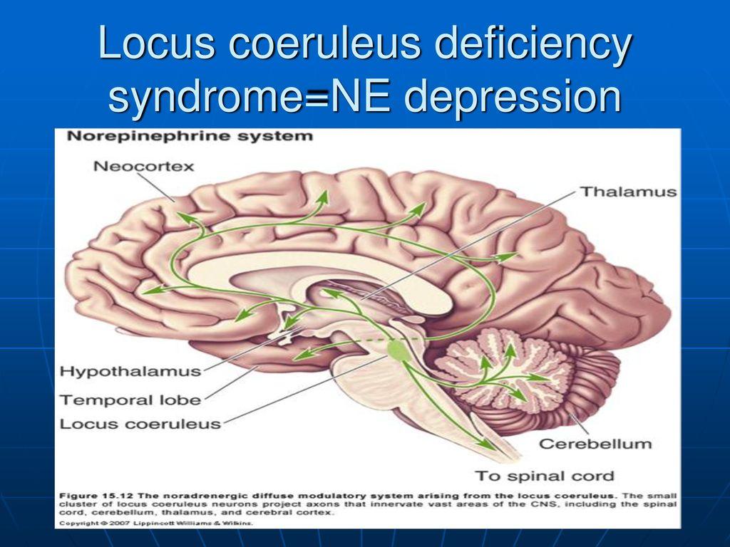 UTMCK Dept. of Medicine: Neuropsychopharmacology - ppt download