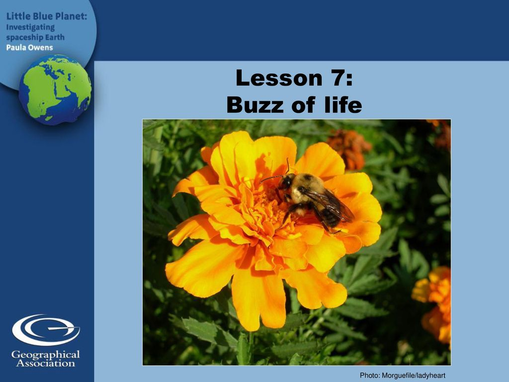 Lesson 7: Buzz of life Photo: Morguefile/ladyheart  - ppt