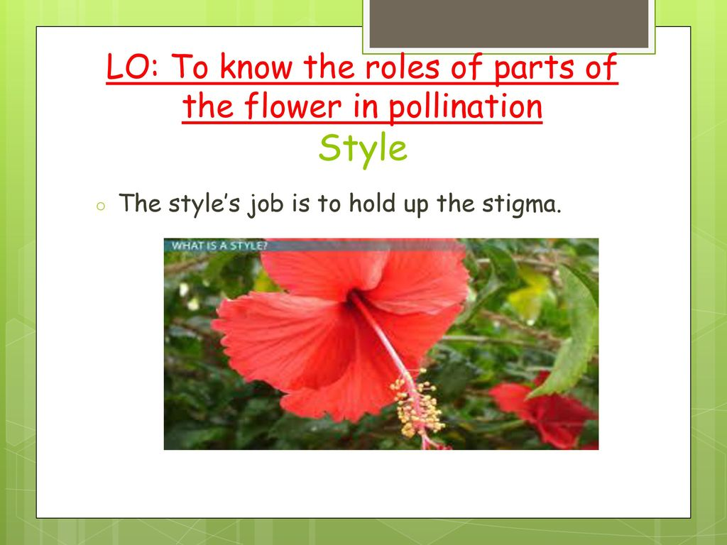 Plants week ppt download lo to know the roles of parts of the flower in pollination style izmirmasajfo