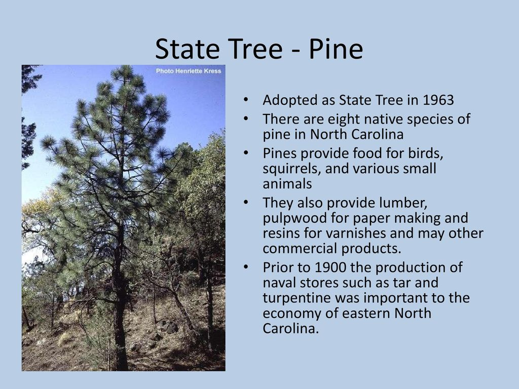 North Carolina State Symbols Ppt Download