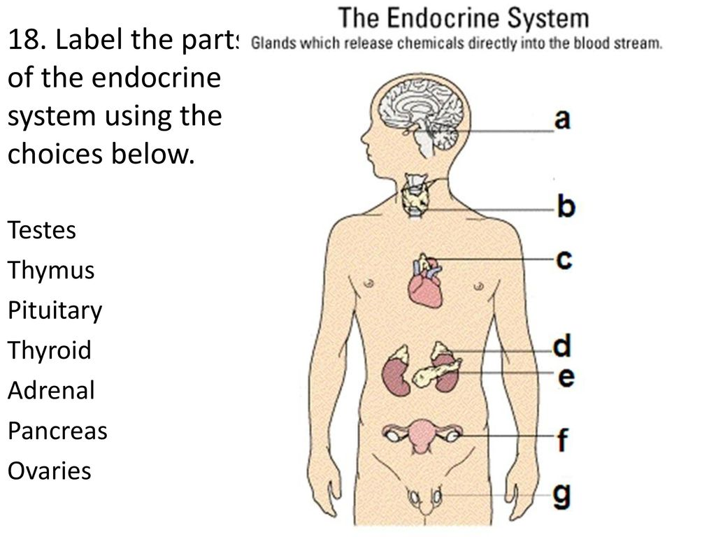 Human Body Challenge As a group, read and discuss each question. I ...