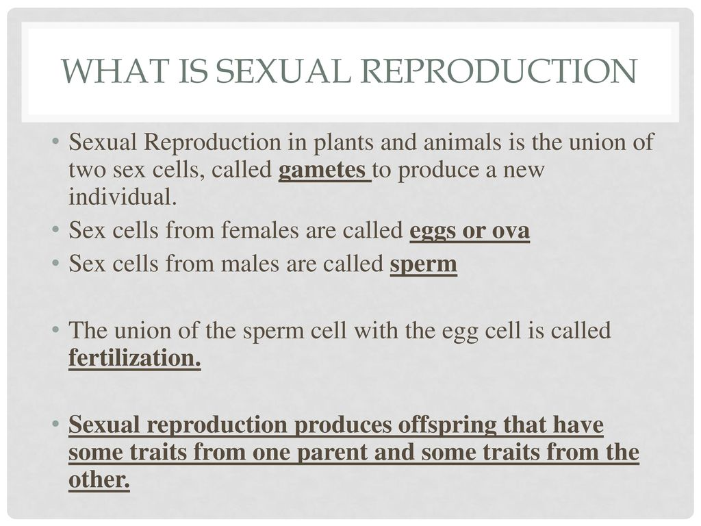 Sexual reproductive cells are called