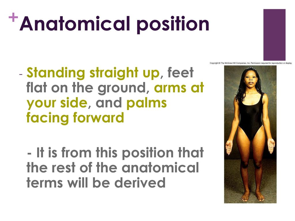 Unit 1: Intro to Anatomy Chapter ppt download