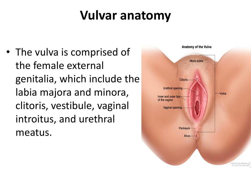 Vulva Vaginal Carsinoma Ppt Download