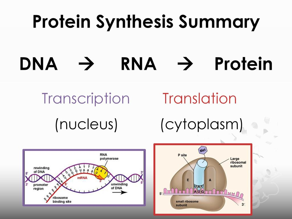 labpaq dna and protien synthesis When protein synthesis is taking place, enzymes link trna to amino acids in a highly specific manner the third form of rna is messenger rna (mrna) , which receives the genetic code from dna and carries it into the cytoplasm where protein synthesis takes place.