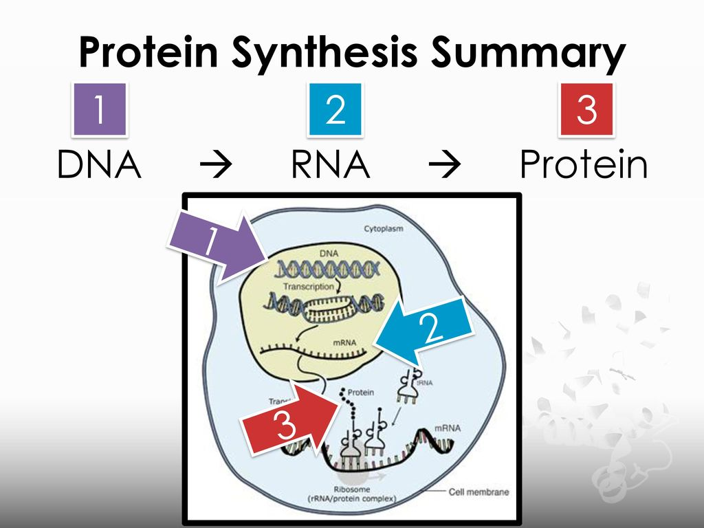 sythesis dna and rna Rna synthesis requires accurate and efficient initiation, elongation proceeds in the 5' → 3' direction (ie the polymerase moves along the template strand of dna in the 3' → 5' direction), and rna synthesis requires distinct and accurate termination.