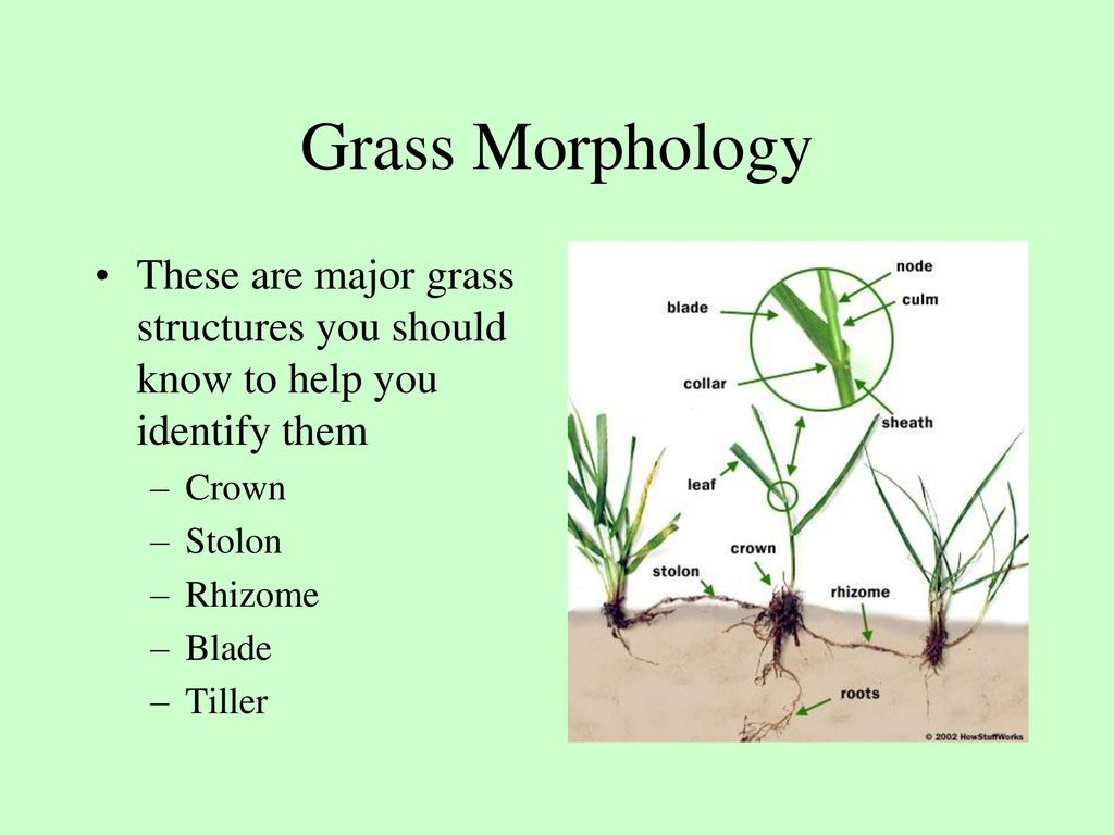 How you identify grass and environmental requirements ppt download