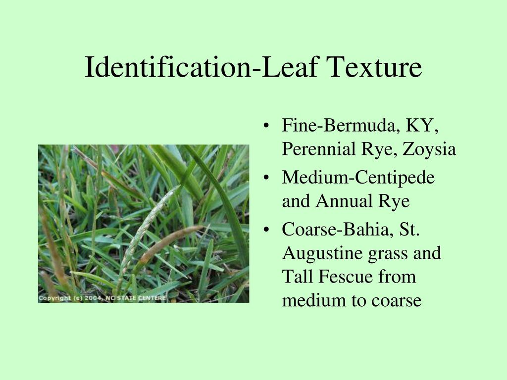 How you identify grass and environmental requirements ppt