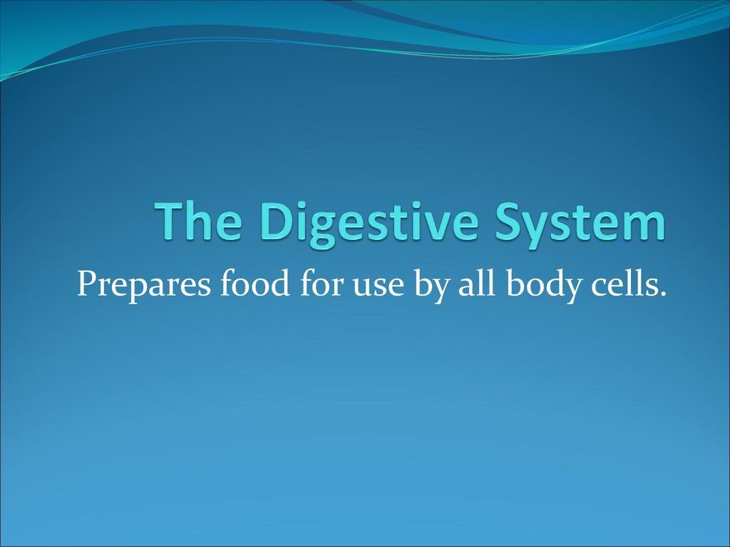 Prepares Food For Use By All Body Cells Ppt Download