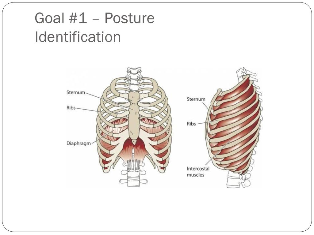 Goal+%231+%E2%80%93+Posture+Identification slide school getting the most out of your trombone players ppt