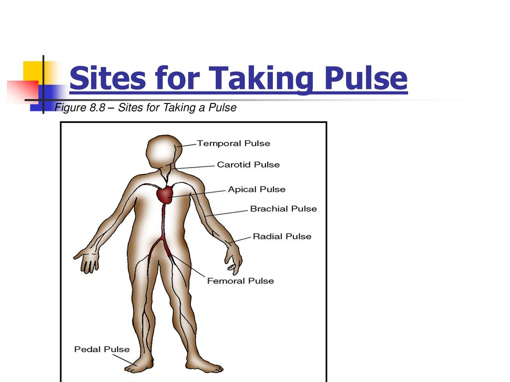 8 Sites For Taking Pulse Figure 88 A