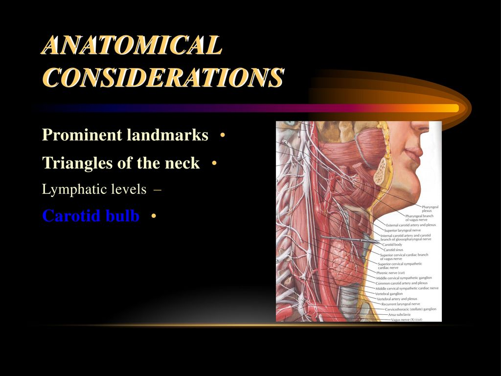 Evaluation And Management Of The Patient With A Neck Mass Ppt Download