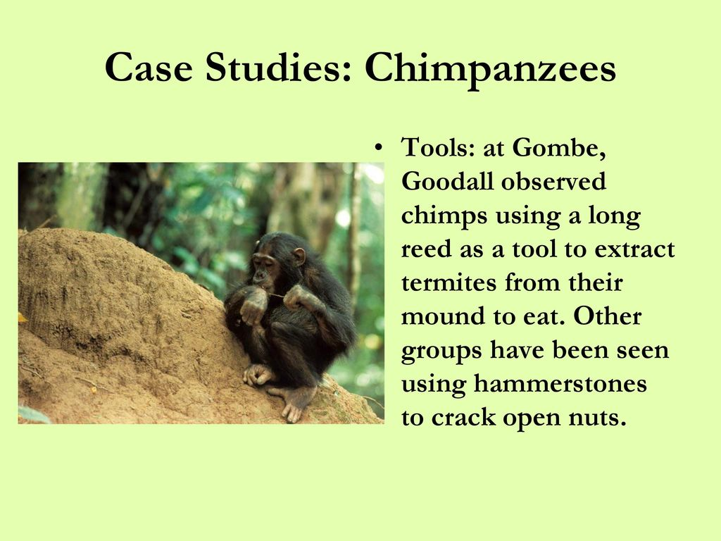 Primate Behavioral Ecology - ppt download