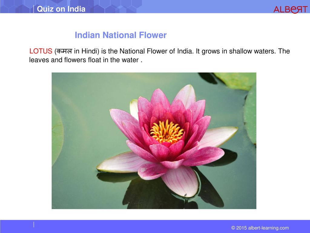 essay on national flower of india National symbols of india in hindi for kids all information about emblem, flower, bird, tree, animal, fruit भारत के प्रमुख राष्ट्रीय प्रतीक की जानकारी.