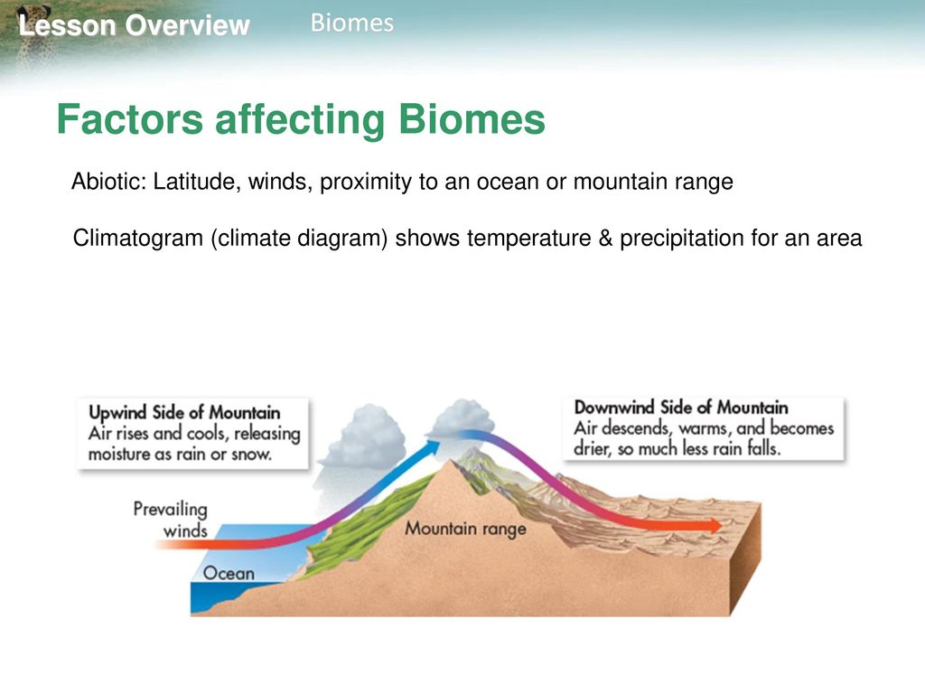 Mountain Biome Diagram Trusted Wiring Diagrams Of Mountai Lesson Overview 4 Biomes Ppt Download Temperature