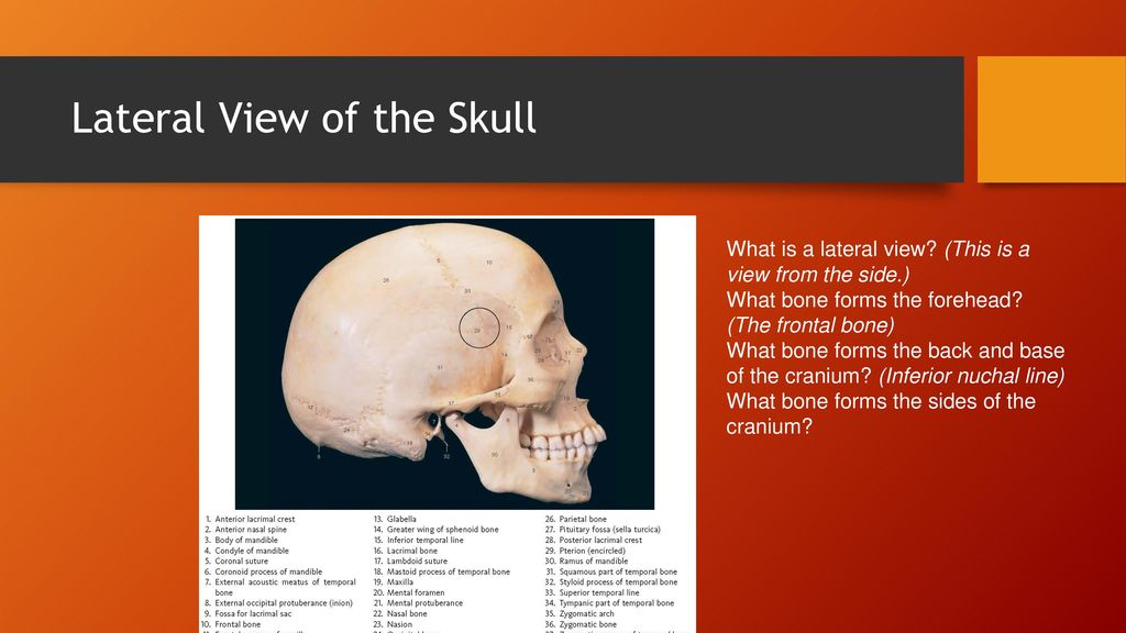 Chapter 9 Head And Neck Anatomy Ppt Download