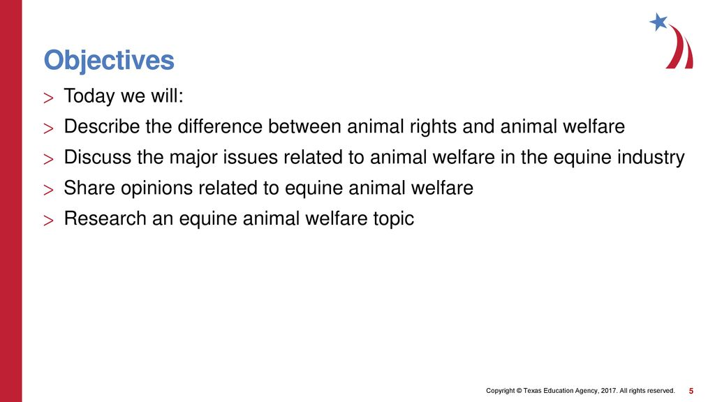 animal rights research topics