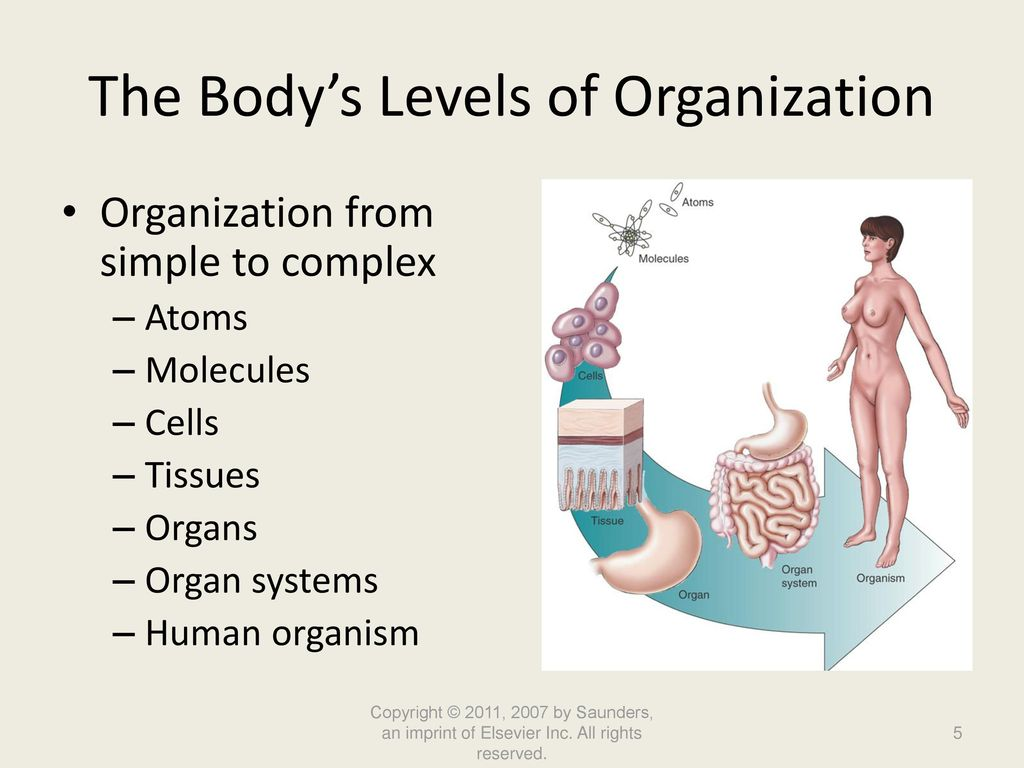 human body complex organism