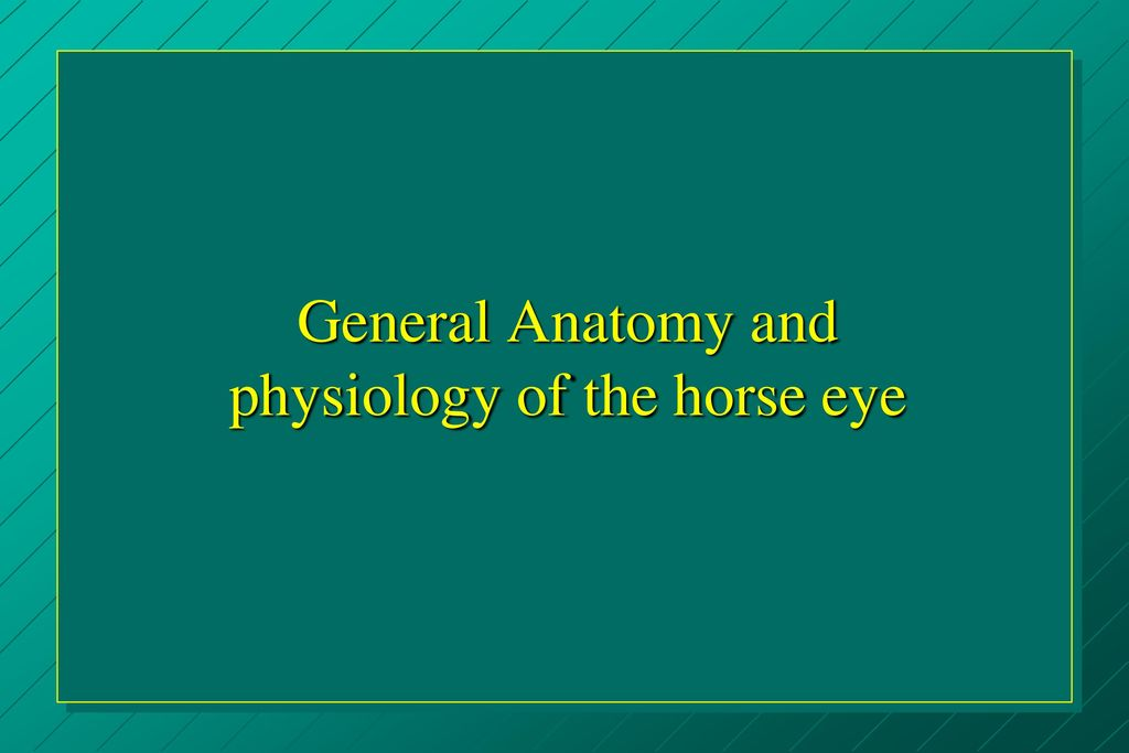 Eye Examination Techniques in Horses - ppt download