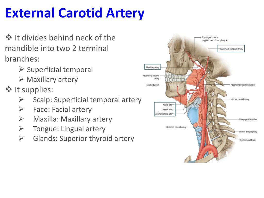 interior internal mammary artery location » Full HD MAPS Locations ...