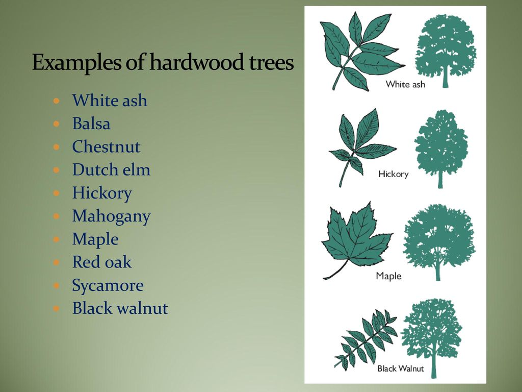 Forests And Wood Products Ppt Download
