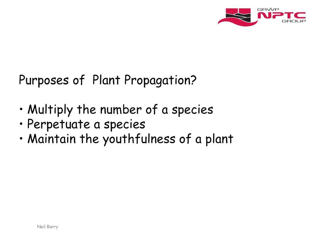 Plant Propagation Ppt Download