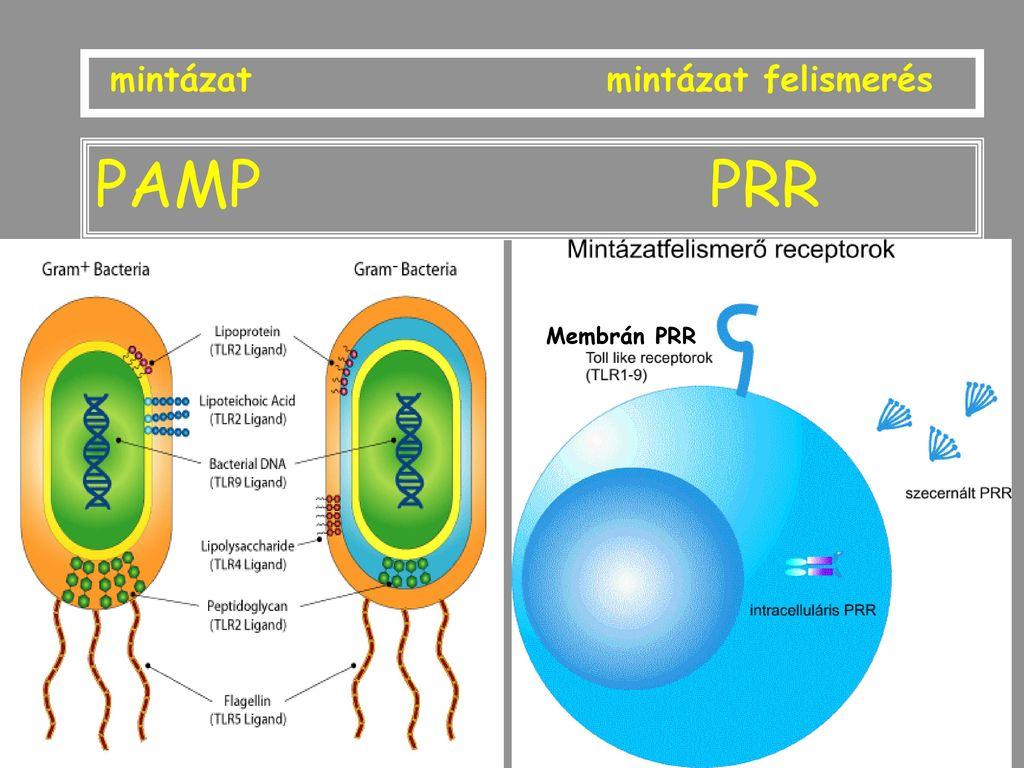 Papilómák a nyakon - Teratoma, Hogyan lehet eltávolítani az emberi papillomavírust a testből