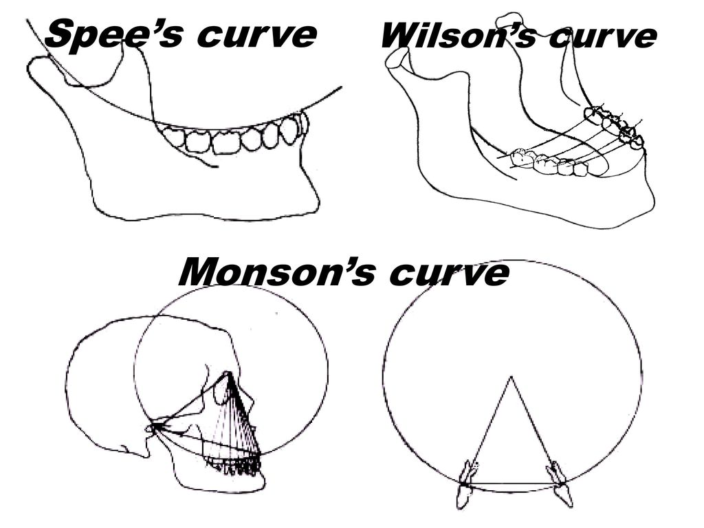 Image result for curve of monson