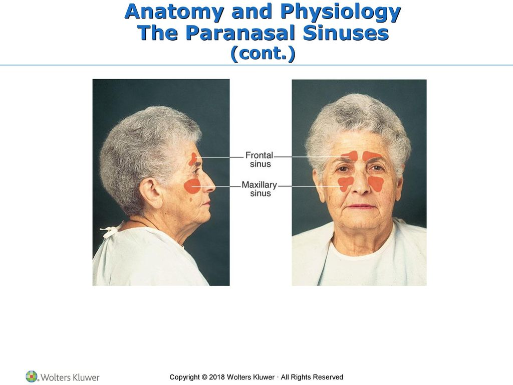 Chapter 12 Ears, Nose, Mouth, and Throat - ppt download