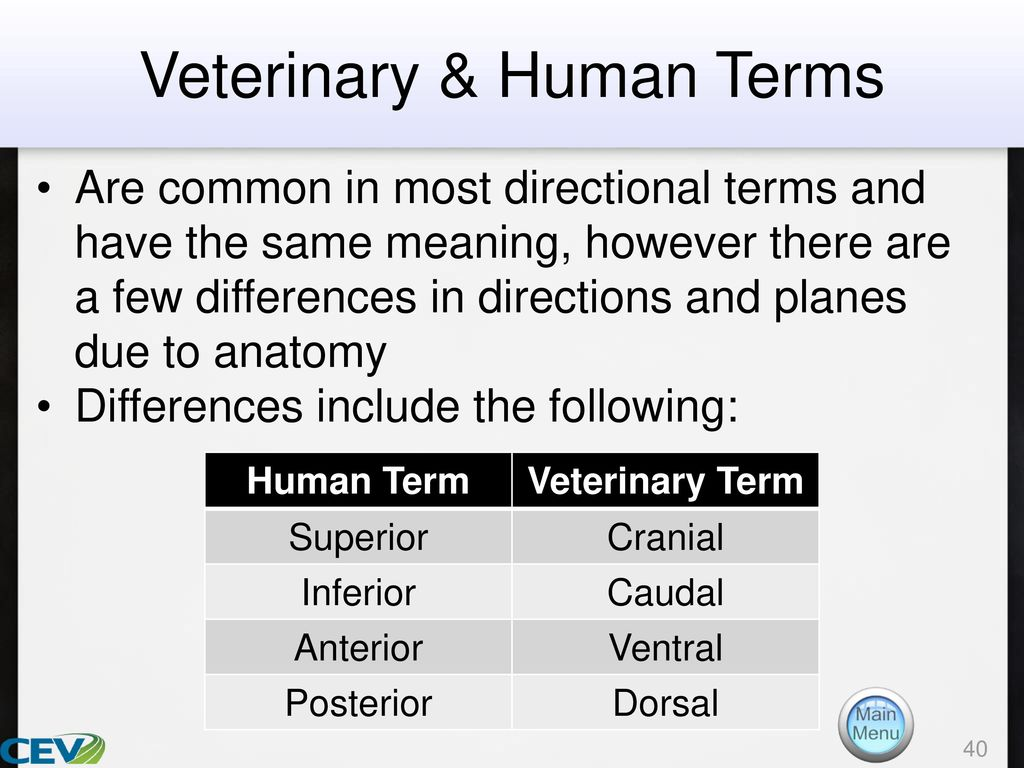 Objectives To identify veterinary terms and to discover