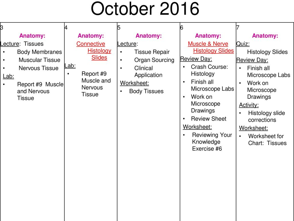 Worksheets Body Tissues Worksheet august first day of school anatomy activity cp syllabus ppt october lecture tissues body membranes