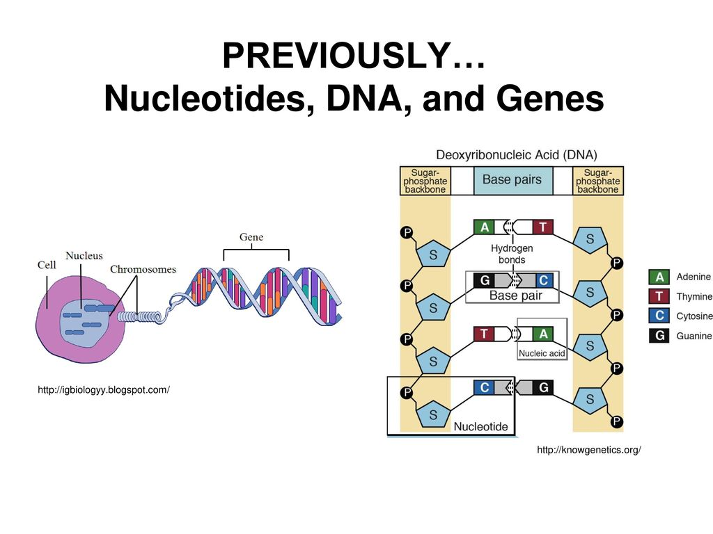 dna nucleotide ba self reliance - HD1024×768