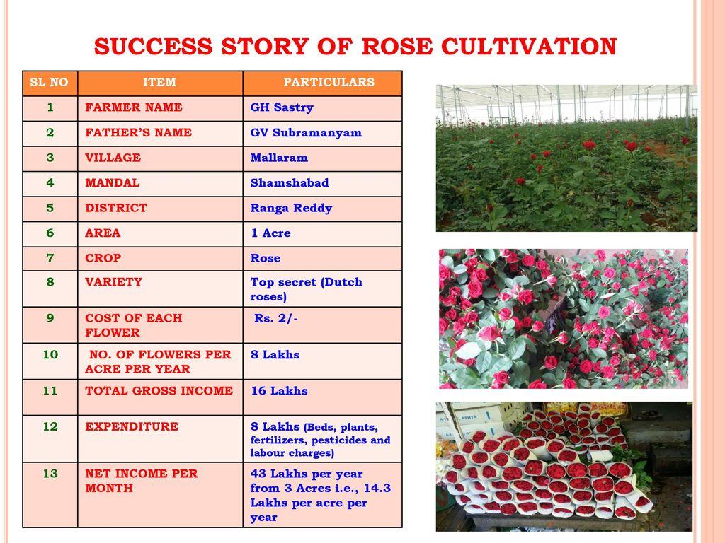 Success story of capsicum - ppt download