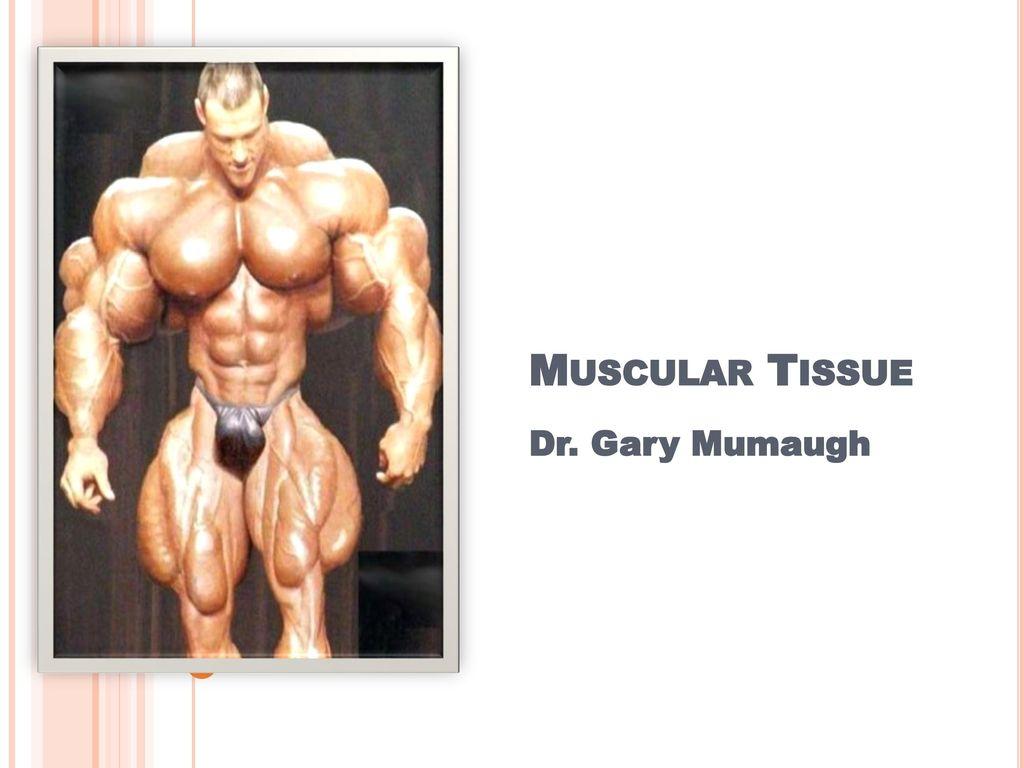Muscular Tissue Dr. Gary Mumaugh. - ppt download