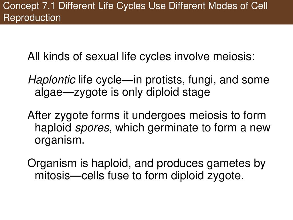 Sexual life cycle involves