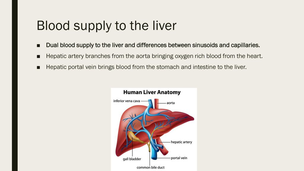 D3 Function Of The Liver Ppt Download