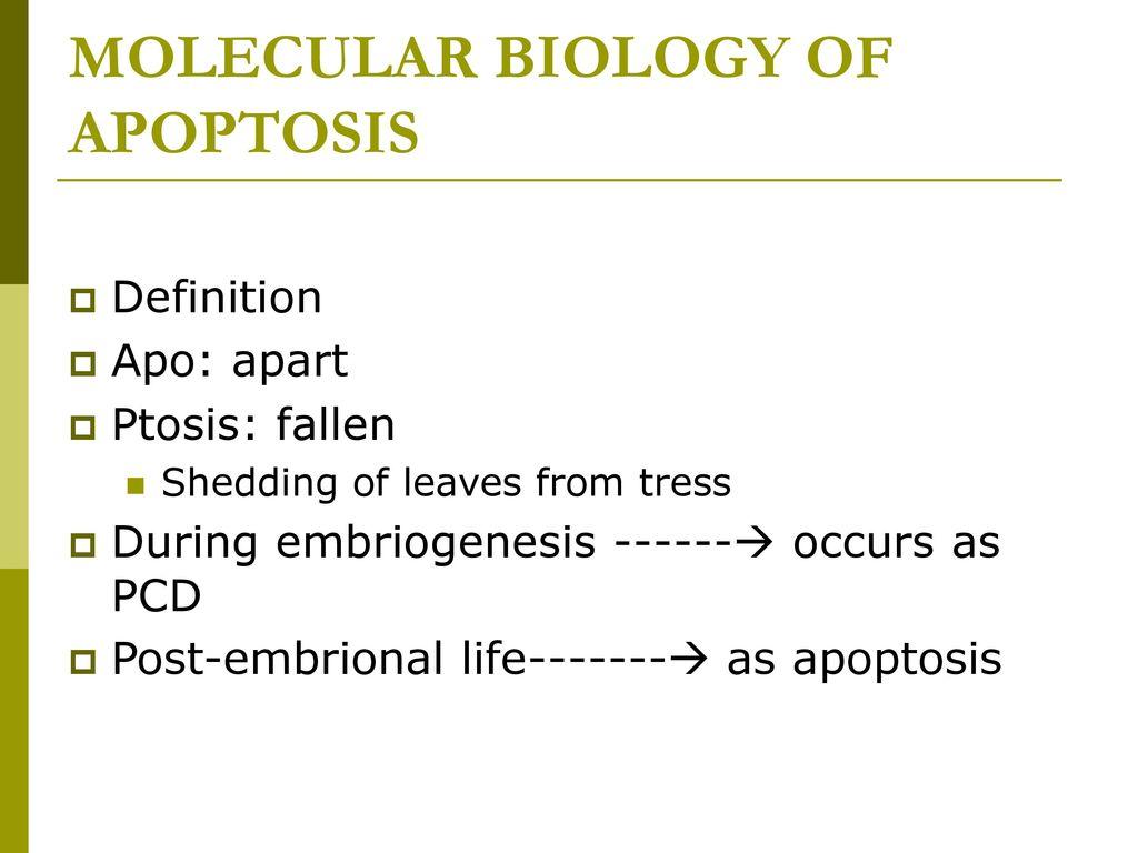 molecular biology of apoptosis - ppt download