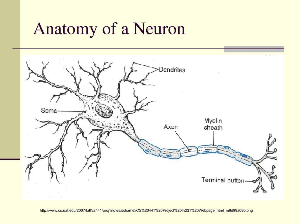 Nervous System Chapter ppt download