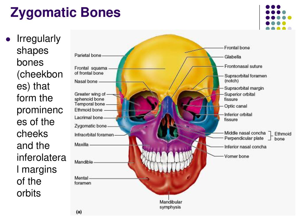 Anatomy of The Musculoskeletal System - ppt download